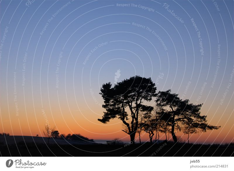 After sunset Natur Landschaft Himmel Wolkenloser Himmel Horizont Sonnenaufgang Sonnenuntergang Winter Schönes Wetter Baum blau rot Zufriedenheit ruhig Sehnsucht