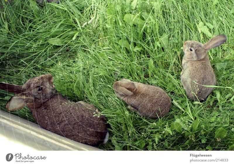 Wie wir uns nennen bleibt unter uns, Hase! Natur schön Tier Tierjunges Umwelt Wiese Gras Zusammensein Freundschaft bedrohlich Fell Haustier Hase & Kaninchen