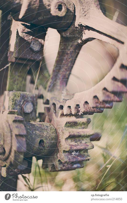 Zahnräder Industrie Maschine Zahnrad Rost Schraube Metall alt hässlich trist Tag Schwache Tiefenschärfe Gras Verfall Wandel & Veränderung Menschenleer