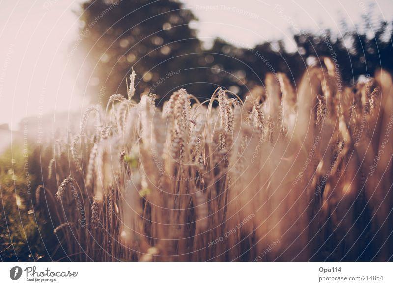shine a little love Natur Pflanze Sommer Freude Erholung Gras träumen Landschaft Zufriedenheit Feld warten glänzend Umwelt Sträucher beobachten Lebensfreude