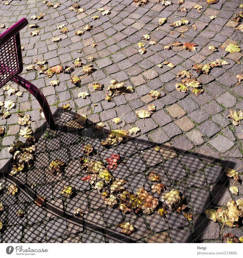 Herbst wirft seine Schatten... Schönes Wetter Blatt Menschenleer Wege & Pfade Bank Stein Metall Erholung liegen stehen dehydrieren ästhetisch außergewöhnlich