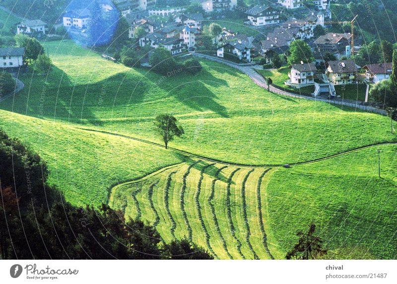 Seis Wiese Baum Dorf Matten Berge u. Gebirge Mahd Weide Morgen Schatten Nebel