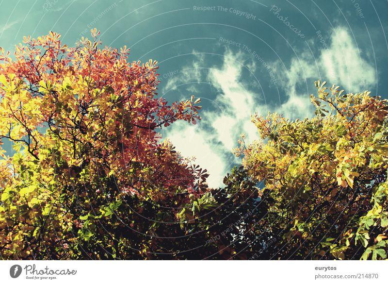 Und wieder wird es Herbst Natur Himmel Baum grün blau Pflanze ruhig Blatt Wolken gelb Wald Erholung Herbst Holz Landschaft Luft