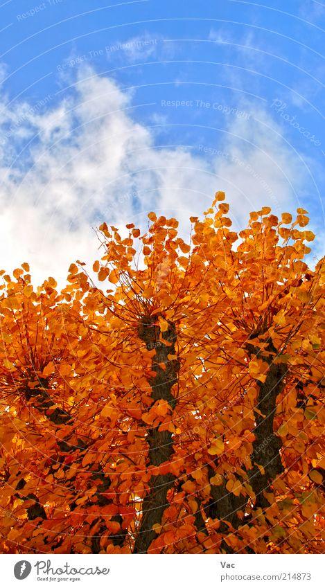 Natur schön Himmel Baum Pflanze Blatt Wolken gelb Herbst Wiese Holz Park Wärme Luft braun Wind