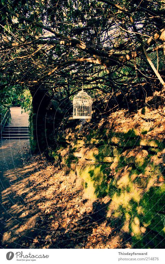Natur Pflanze Sommer Baum Erholung Landschaft ruhig Freude Winter Umwelt Herbst Frühling Gras Stil Garten Sand
