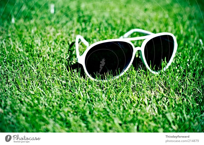 Sonnenbrille Lifestyle Stil Freude Tourismus Sommer Sommerurlaub Sonnenbad Natur Erde Sonnenlicht Schönes Wetter Gras Garten Kunststoff genießen hängen Lächeln