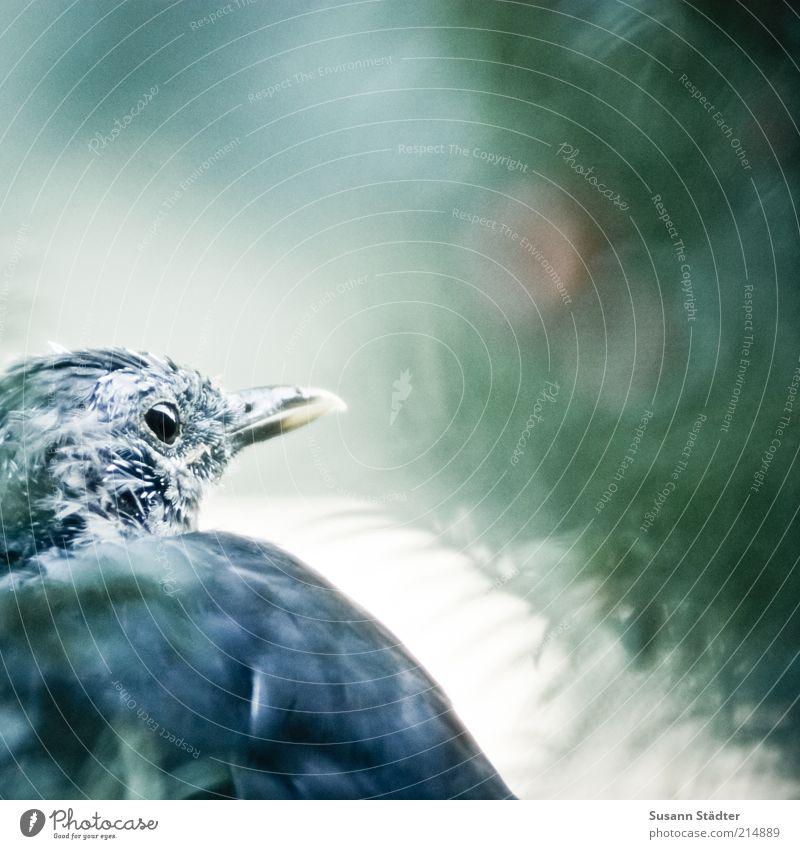 unbeobachtet Sommer Baum Wildtier Vogel Tiergesicht Flügel Fell 1 beobachten warten alt außergewöhnlich authentisch trist Traurigkeit Sorge Nadelbaum Pause Eibe