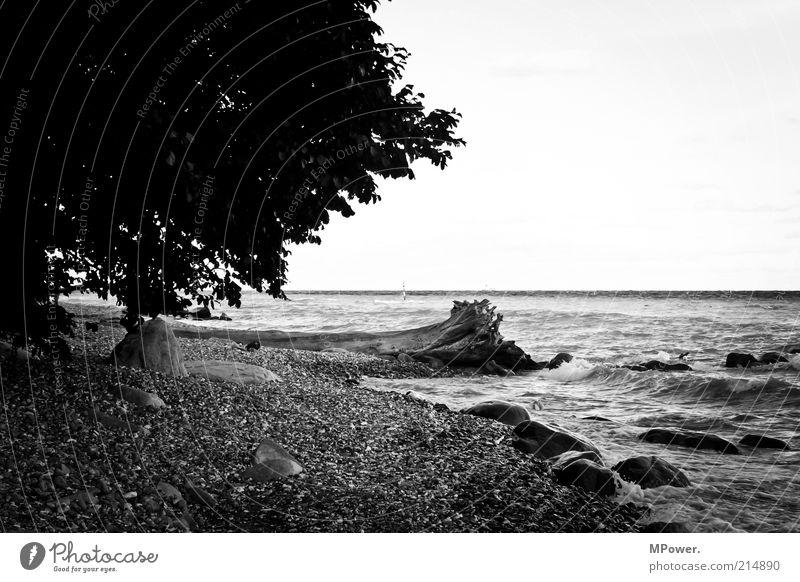 Küste Natur Wasser Baum Meer Strand Einsamkeit Erholung Stein Sand Wellen Felsen Insel Seeufer Baumstamm Kies