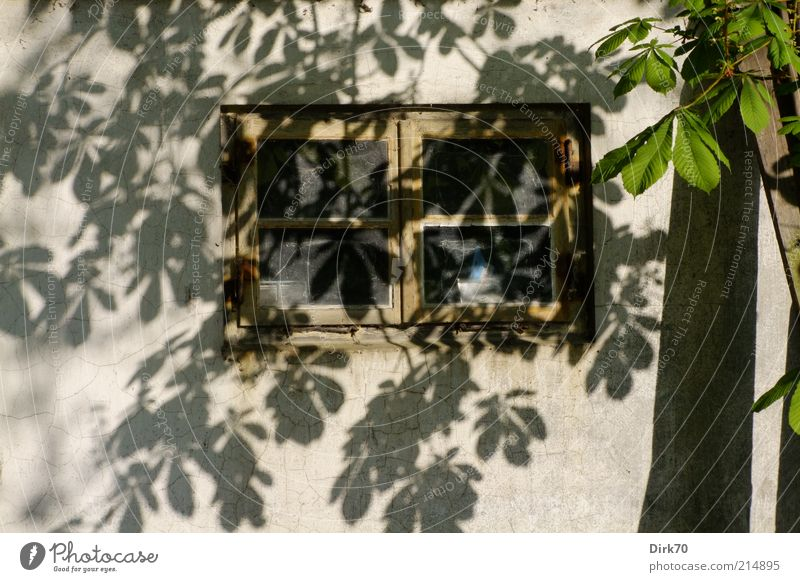 Blätterschatten Baum Blatt Kastanienbaum Zweig Baumstamm Dorf Hütte Gebäude Scheune Mauer Wand Fenster Fensterrahmen braun grau grün weiß achtsam