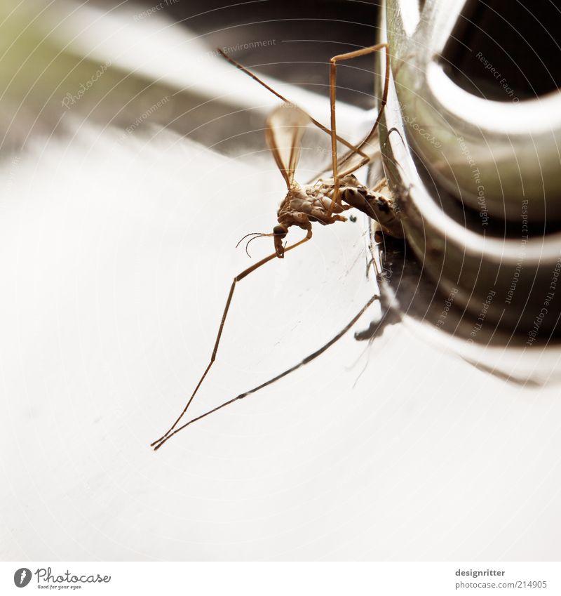 Insektenvernichter Tod PKW Verkehrsmittel Stechmücke Makroaufnahme Plage Textfreiraum links Totes Tier Schnake Mückenschutz Mückenplage