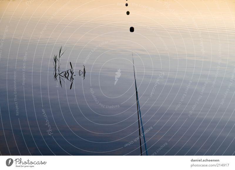 neulich am See Wasser blau ruhig Seil Oberfläche friedlich maritim Boje Begrenzung Wasseroberfläche Pflanzenteile Wasserspiegelung