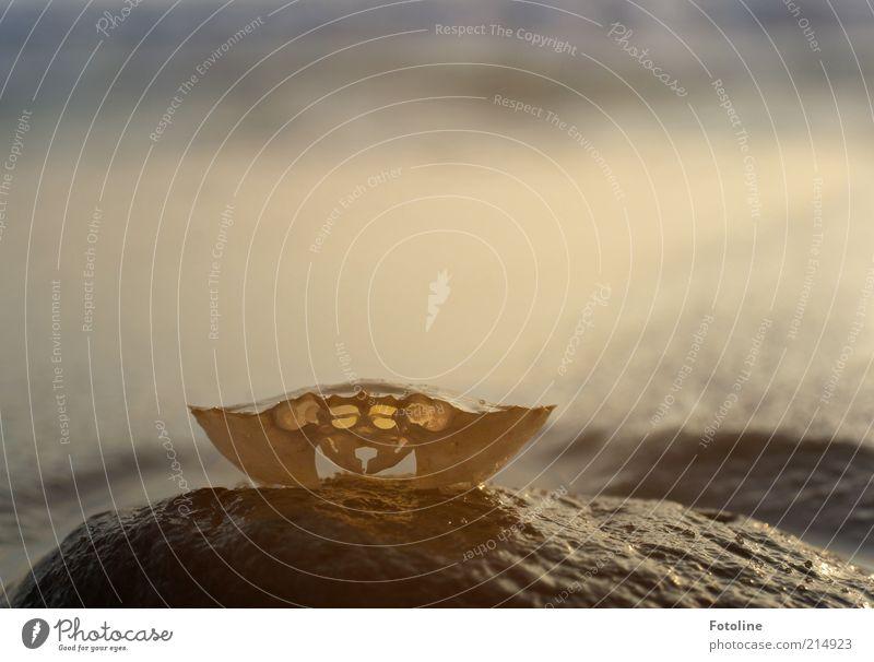 Häutung Natur weiß Tier Stein braun hell Umwelt nass leer einzigartig natürlich ohne feucht Urelemente Nordsee Skelett