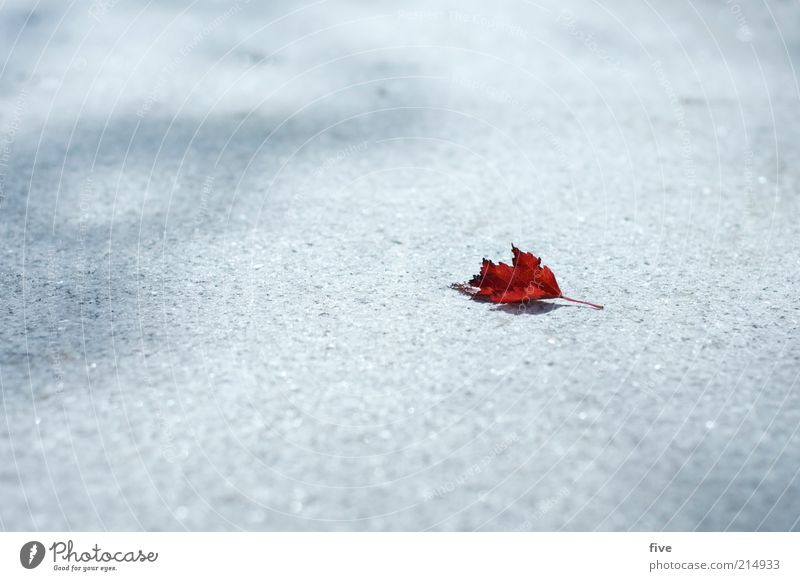 der herbst zieht ein Natur rot Blatt kalt Herbst klein liegen trocken Herbstlaub Detailaufnahme herbstlich Herbstfärbung Herbstbeginn