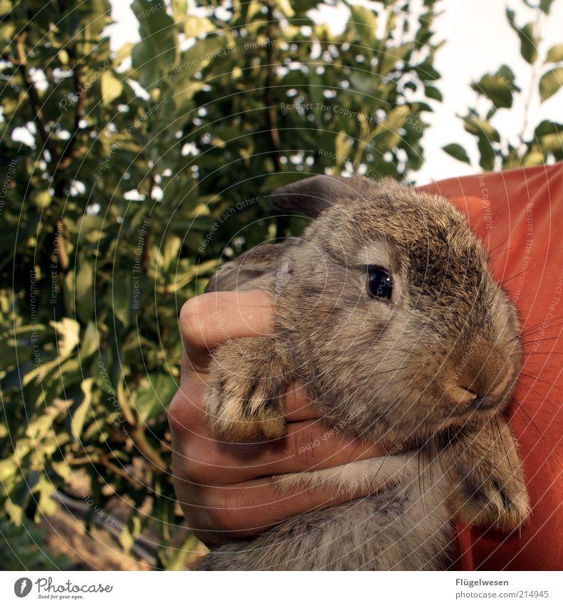 Playboy-Bunny Tier Haustier Nutztier Wildtier Fell nah Hase & Kaninchen Hasenjagd Hasenpfote Hand gefangen festhalten Tierliebe niedlich Farbfoto Außenaufnahme