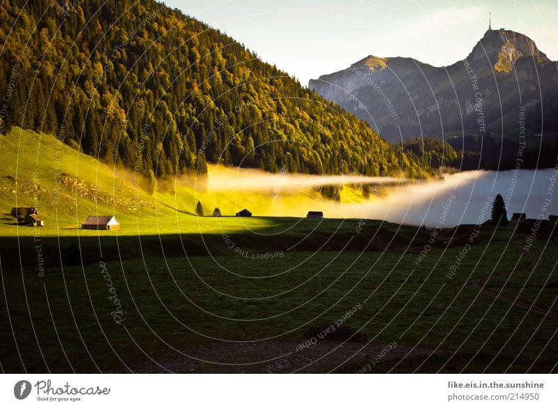 morgens um 9 im Alpstein... Natur ruhig Einsamkeit Wald Erholung Wiese Herbst Gras Berge u. Gebirge Freiheit Landschaft Zufriedenheit Nebel Schweiz Alpen