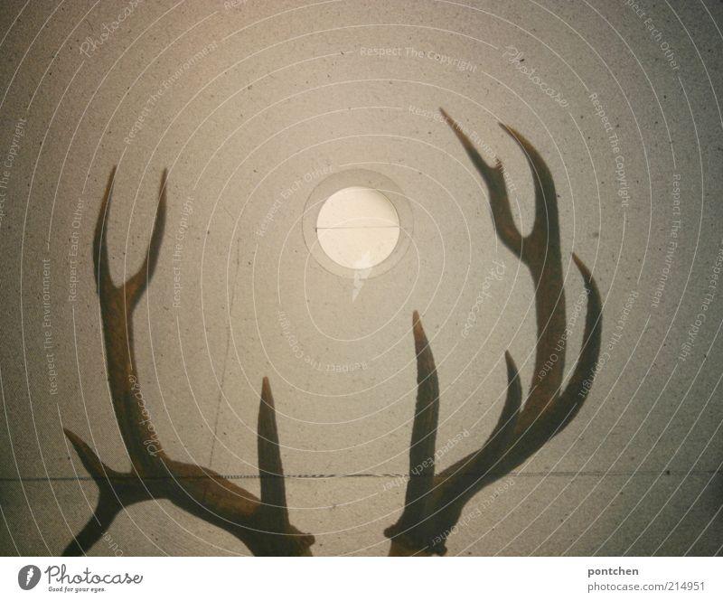 Kopfbedeckung Stil Häusliches Leben einrichten Wildtier Hirsche 1 Tier außergewöhnlich dunkel eckig braun Horn beeindruckend Mittelformat Sucher Wand