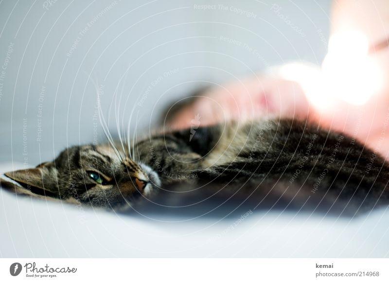 Bettgeselle Katze Mensch Tier Auge hell liegen träumen Zufriedenheit schlafen Bett Vertrauen Fell Haustier Tiergesicht Geborgenheit Sympathie