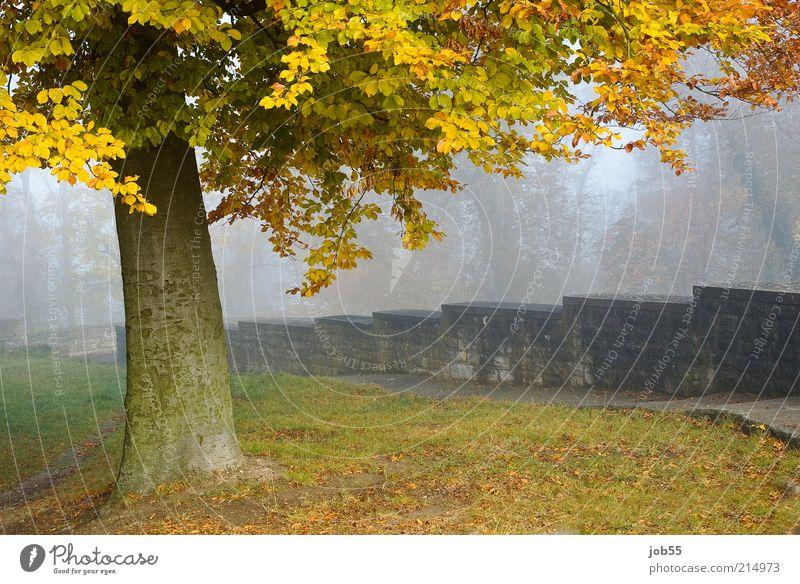 Septembermorgen Natur Baum ruhig Herbst Wand Mauer Wege & Pfade Park Landschaft Nebel Romantik Frieden Burg oder Schloss Ruine Wahrzeichen