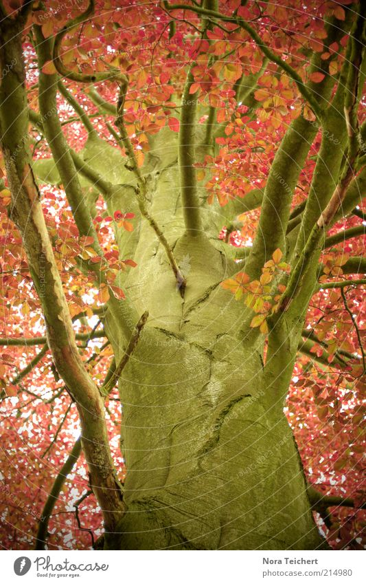 autumn view Himmel Natur alt schön Baum rot Pflanze Farbe Blatt Umwelt Herbst Gefühle Holz träumen orange groß