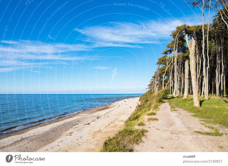 Küstenwald an der Ostsee bei Nienhagen Erholung Ferien & Urlaub & Reisen Tourismus Strand Meer Wellen Natur Landschaft Wasser Wolken Baum Wald Wege & Pfade blau
