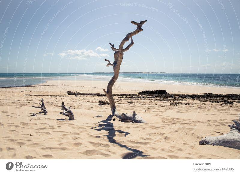 paradiesisch Himmel Natur Ferien & Urlaub & Reisen Pflanze Sommer schön Wasser Baum Meer Ferne Strand Umwelt Küste Holz Freiheit Tourismus