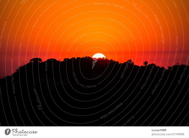 Afrika Ferien & Urlaub & Reisen Sommer Sonne Baum ruhig Ferne Wald Berge u. Gebirge außergewöhnlich Tourismus Freiheit Felsen Ausflug Horizont Park Abenteuer