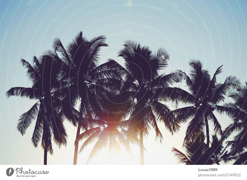 Urlaub im Paradies Ferien & Urlaub & Reisen Pflanze Sommer schön Sonne Baum Meer Freude Ferne Strand Freiheit Tourismus Freizeit & Hobby Ausflug Abenteuer