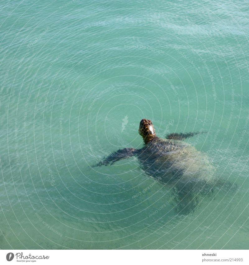 Guten Tag! Wasser alt Meer Tier Luft Wildtier atmen Umwelt Schildkröte Wasseroberfläche Wasserschildkröte