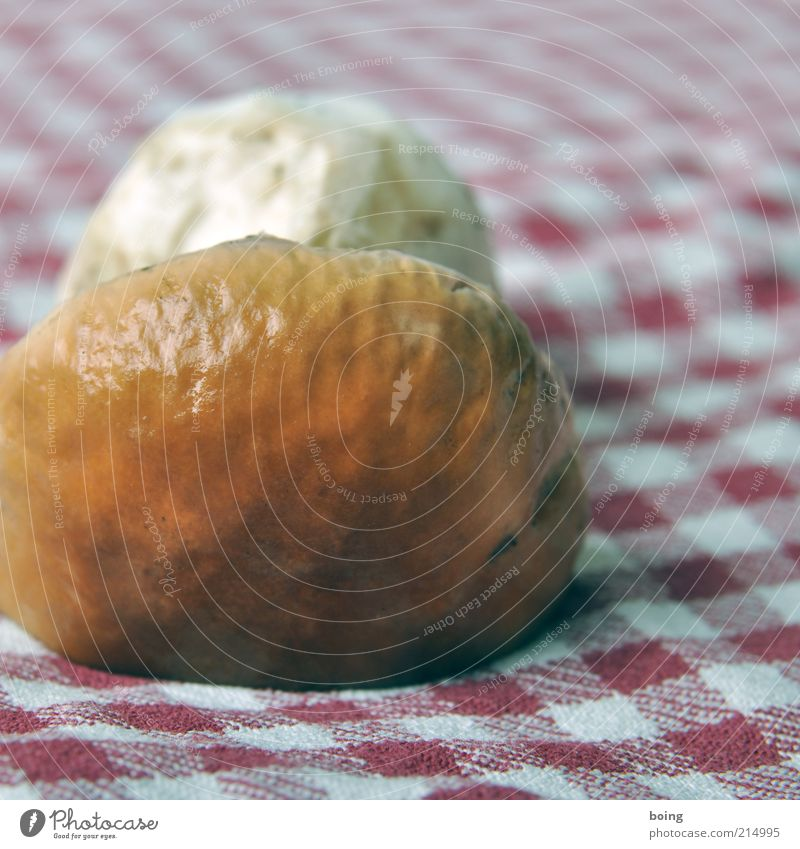 http://bit.ly/zu3i3s8 Lebensmittel Steinpilze Waldpilz Pilzhut Duft Farbfoto Gedeckte Farben Studioaufnahme Nahaufnahme Dickröhrling essbar Delikatesse 1