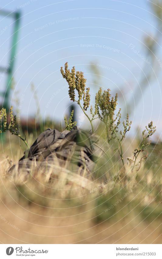 Eingewachsen Pflanze Gras Sträucher Schuhe Wanderschuhe vergessen Wiese Schuhbänder Farbfoto Außenaufnahme Menschenleer verloren