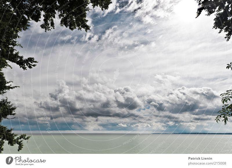 Into The Great Wide Open Natur Wasser Himmel Baum Meer Pflanze Ferien & Urlaub & Reisen Wolken Landschaft Luft Stimmung Küste Wellen Wind Wetter Umwelt