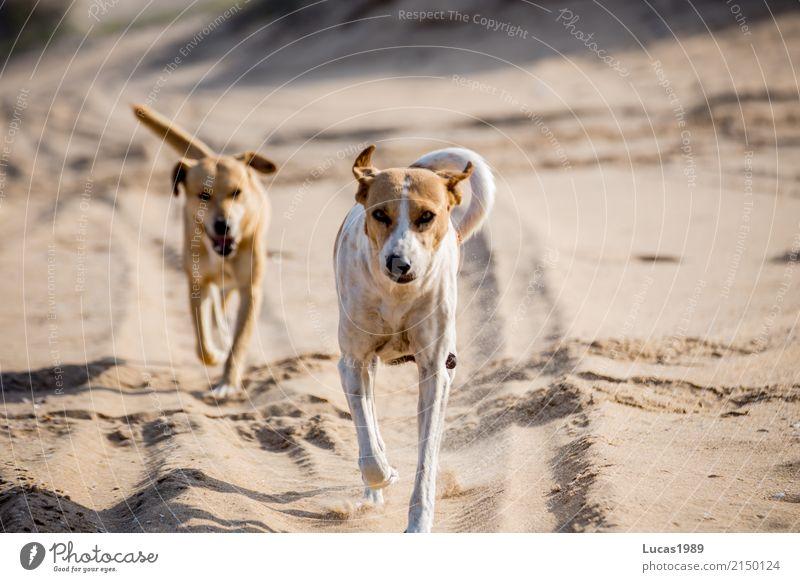 Der beste Freund des Menschen Natur Hund weiß Sonne Tier Strand Bewegung Spielen Glück braun springen Tierpaar Wildtier laufen Schönes Wetter Tiergruppe