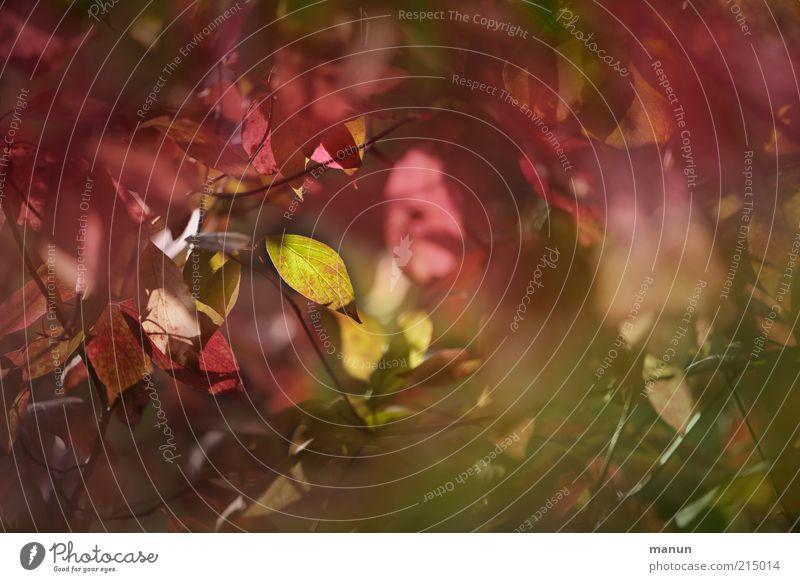 Blattwerk schön Baum grün rot Blatt Herbst Wachstum Wandel & Veränderung Vergänglichkeit Originalität Herbstlaub herbstlich Herbstfärbung Herbstbeginn