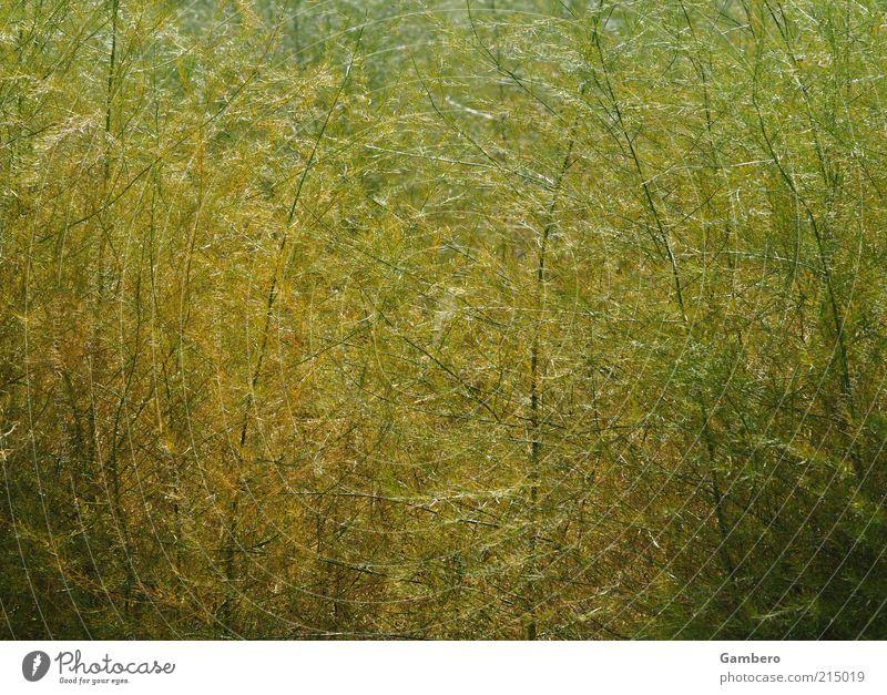 Waldimpressionen Natur grün Pflanze gelb Herbst Gras braun dünn zart lang Schönes Wetter Wildpflanze hellgrün dunkelgrün hellgelb
