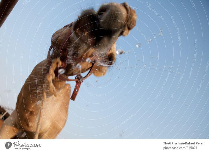Camel rocks Wasser blau Ferien & Urlaub & Reisen Bewegung Kopf braun Wassertropfen trinken Tiergesicht Tropfen außergewöhnlich Schnauze Maul Bewegungsunschärfe