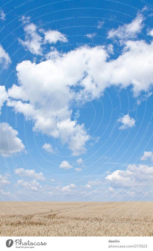 heaven day cloudy Himmel blau Wolken Ferne Herbst Landschaft Feld Horizont Schönes Wetter Blauer Himmel Weizen himmelblau Kornfeld herbstlich Nutzpflanze Weizenfeld