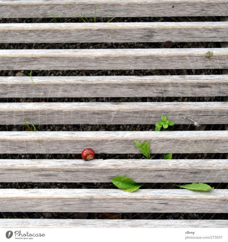eichelnuss Natur Pflanze rot Blatt Gras Holz braun Umwelt frisch Fröhlichkeit Wachstum liegen Lebensfreude Leichtigkeit Grünpflanze Kastanie