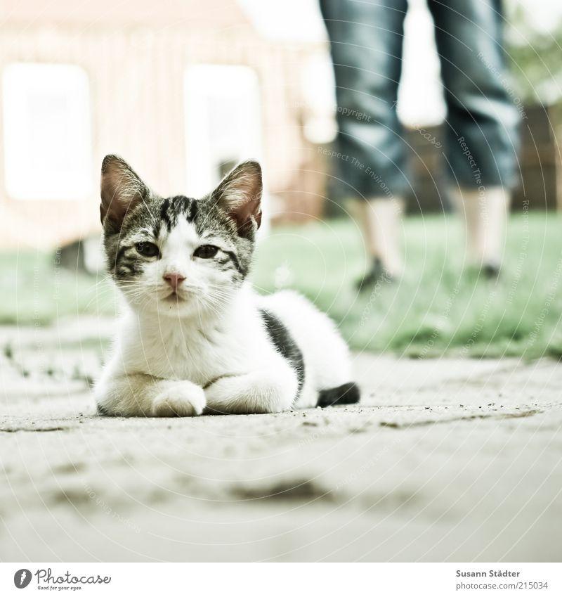 getarnter ALF im Anmarsch Mann Erwachsene Tier Wiese Katze Garten Beine Tierjunges warten liegen niedlich Jeanshose beobachten Tiergesicht Neugier Fell
