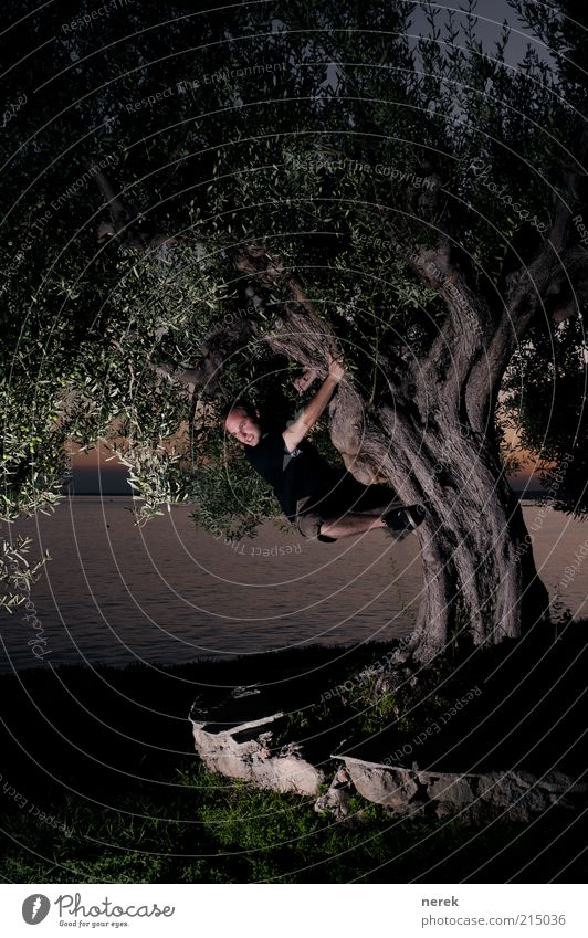 urzeit erfahrung Freude Meer maskulin Junger Mann Jugendliche 1 Mensch Schönes Wetter Baum Wasser beobachten entdecken hängen kämpfen toben Aggression Coolness