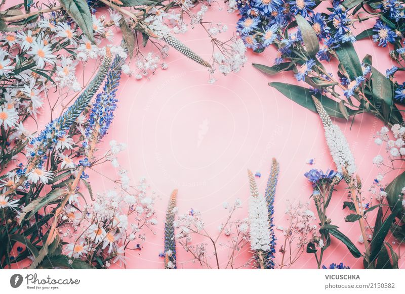 Blumen Rahmen auf rose Hintergrund Natur Pflanze Blatt Blüte Liebe Hintergrundbild Stil Feste & Feiern rosa Design Dekoration & Verzierung Geburtstag Hochzeit