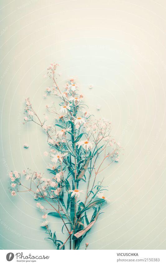 Wilde Kamillen Stil Design Gesundheit Alternativmedizin Leben Sommer Natur Pflanze Blume Blatt Blüte Wildpflanze Liebe Medikament Heilpflanzen Farbfoto