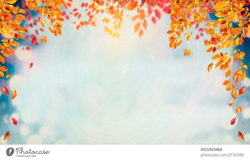 Herbst Hintergrund mit fallenden Baum Blätter Himmel Natur Pflanze Landschaft Blatt gelb Lifestyle Hintergrundbild Garten Design Park Sträucher