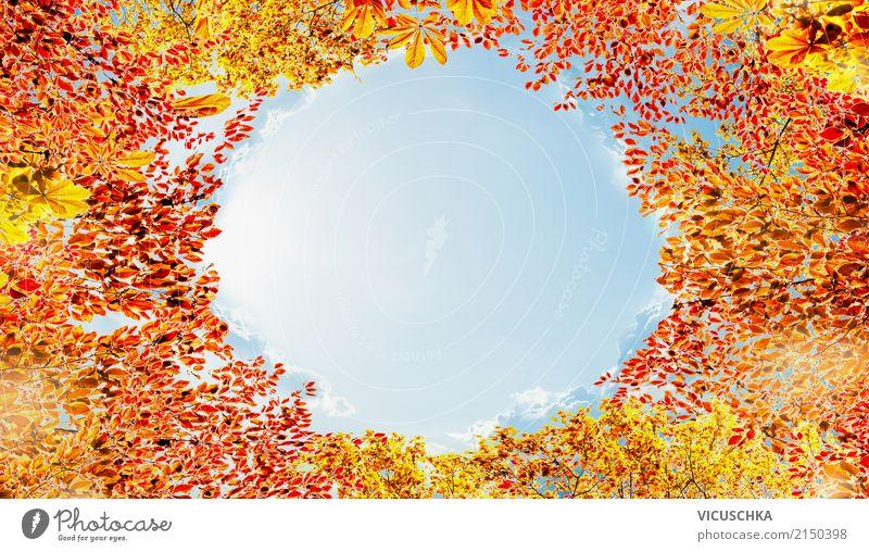 Herbst Laub Rahmen am Himmel Hintergrund Lifestyle Design Garten Natur Landschaft Sonnenlicht Schönes Wetter Park Wald Laubbaum Blatt Hintergrundbild Baumkrone