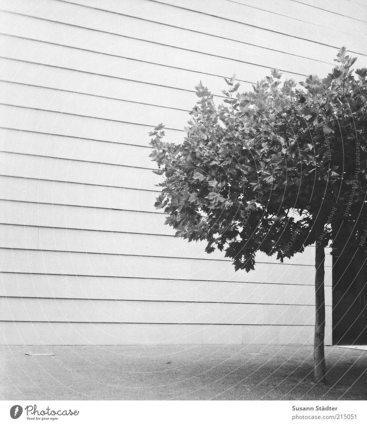 Einheit Baum Haus Dom Bauwerk Mauer Wand Fassade Einsamkeit Linie Synagoge einheitlich Tür Schwarzweißfoto Detailaufnahme Experiment Muster Strukturen & Formen