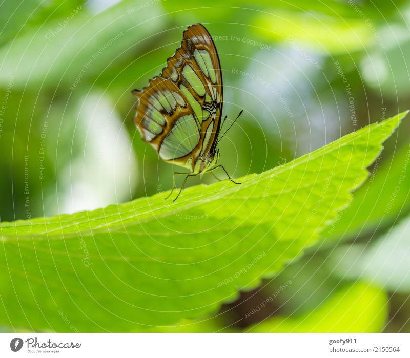 Modell stehen elegant Garten Umwelt Natur Tier Sonne Sonnenlicht Frühling Sommer Pflanze Blatt Park Wiese Nutztier Wildtier Schmetterling Tiergesicht Flügel 1