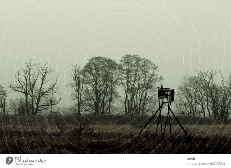 November Natur Baum Winter Wolken dunkel Herbst Traurigkeit Landschaft braun Feld Nebel Trauer trist Vergänglichkeit beobachten Jagd
