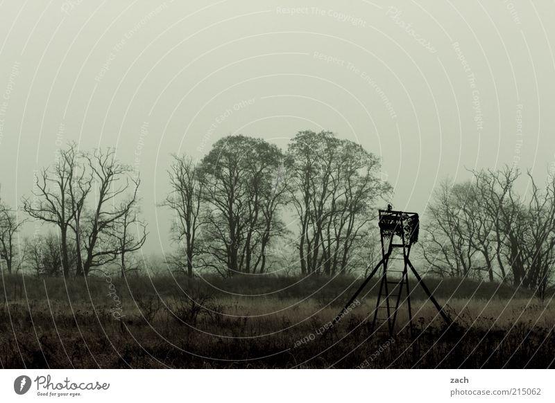 November Natur Landschaft Wolken Herbst Nebel Baum Feld beobachten dunkel braun Traurigkeit Endzeitstimmung Trauer Vergänglichkeit Winter Hochsitz Jagd