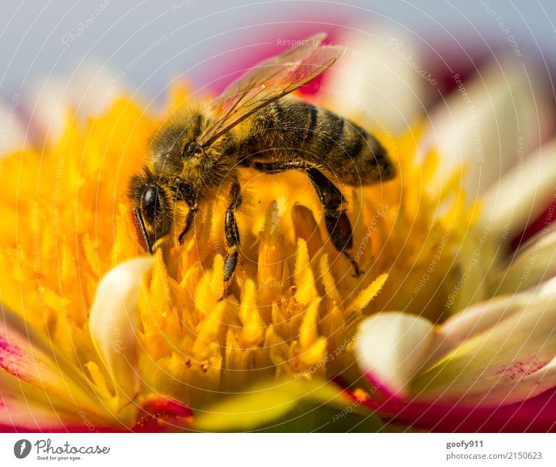Voll mit Blütenstaub!!! Natur Pflanze Sommer schön Blume Tier gelb Umwelt Frühling Wiese natürlich Garten orange Arbeit & Erwerbstätigkeit Park