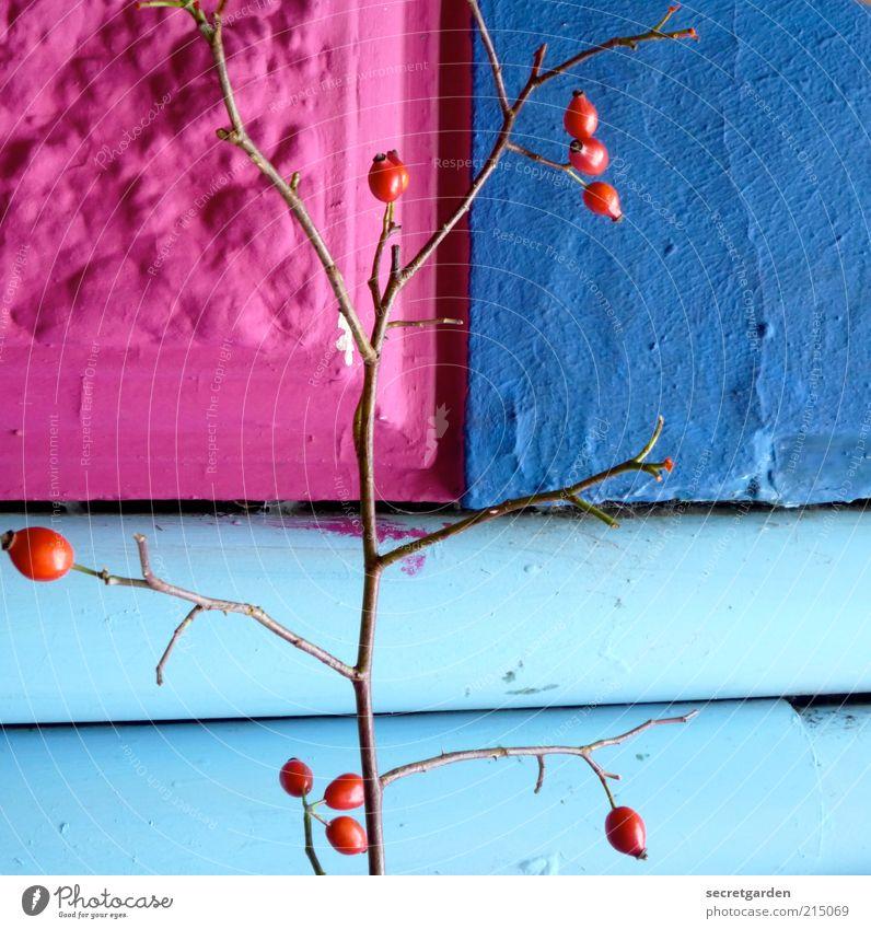 was ist schon richtig rum? schön blau rot Haus Wand Stein Mauer Gebäude Linie Architektur rosa Frucht Fassade Perspektive Wachstum Dekoration & Verzierung