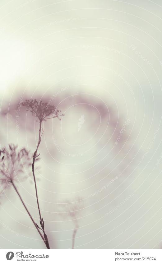 mikroskopisch Natur schön Himmel Blume Pflanze Sommer Wiese Herbst Gefühle Blüte Gras grau träumen Feld Kunst Umwelt